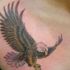 A flying eagle tattoo on man's chest.